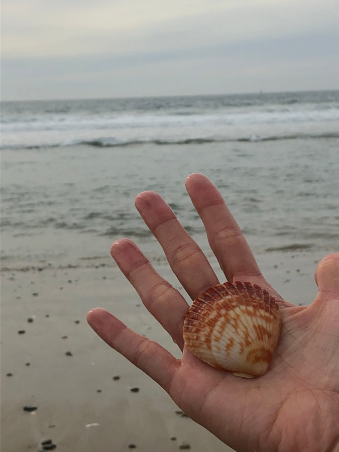 Coffee-Stained Seashells