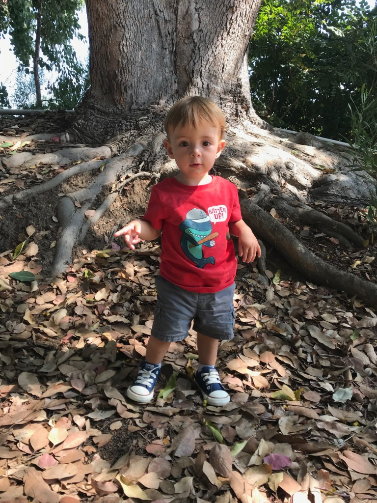 toddler boy with converse shoes standing by tree outside