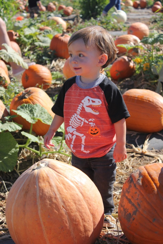 toddler boy with halloween dinosaur skeleton shirt from Target smiling in a  pumpkin patch