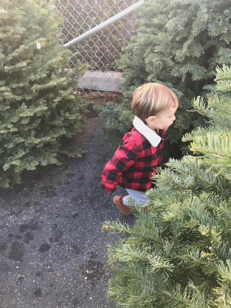 toddler boy playing in Christmas tree lot